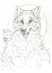 Sketch by Arylena