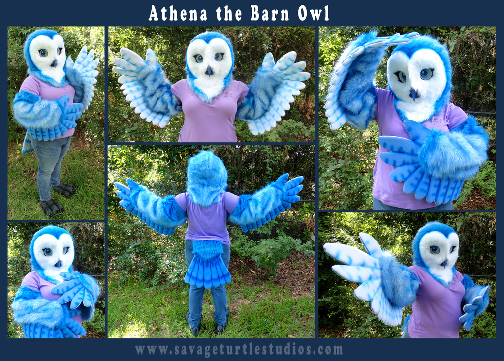 Most recent image: Athena the Barn Owl