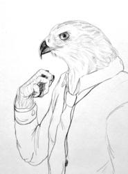 Accipiter Gentilis--sketch