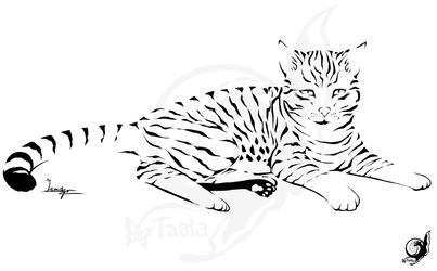 Coda - Kitty Tattoo