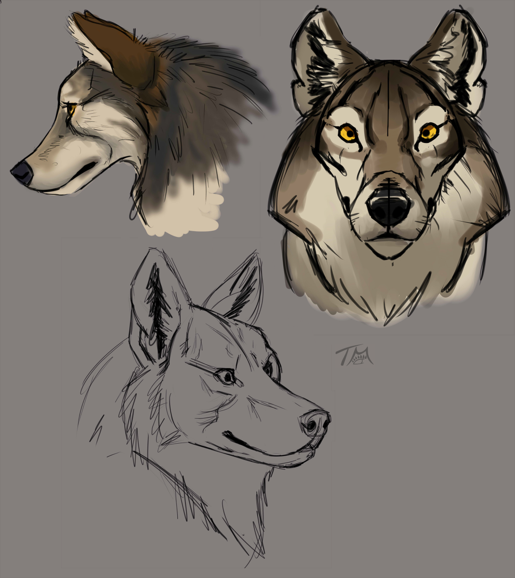 Most recent image: Video Art Tutorial Learnings: 1 - Wolf Heads