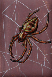 Mini-Drawing--Garden Spider