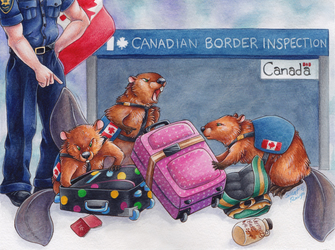 Canadian Drug-Sniffing Beavers