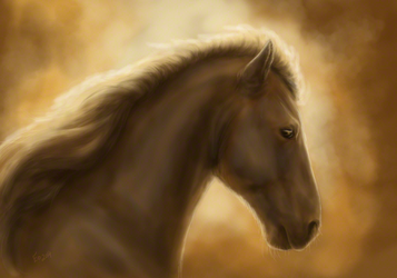 Portrait of an Icelandic Pony