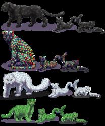 Felis Pardus - Holiday Leopards