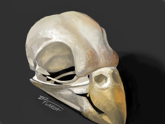 Red Rumped Parrot (Skull 17) [3DS]