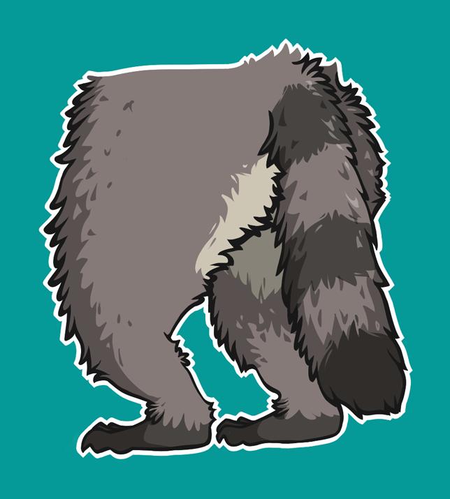 Raccoon Posterior