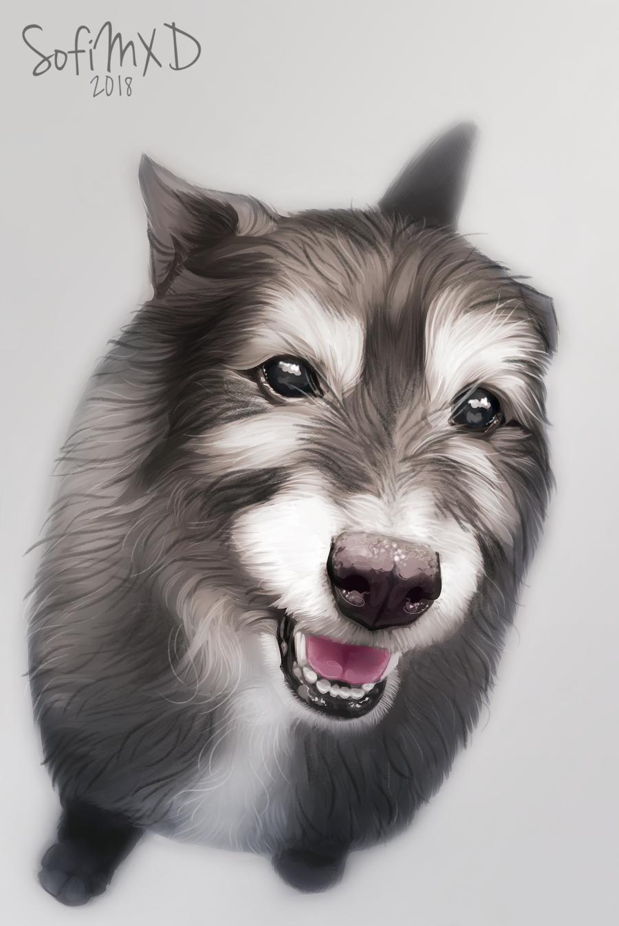 [portrait#11]Tzvii