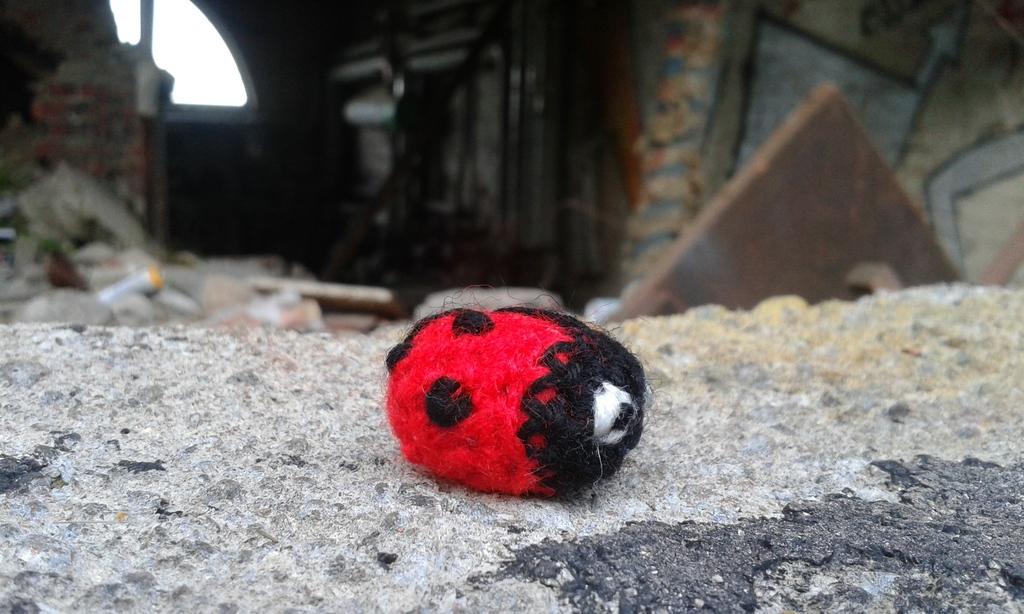 Ladybug in an abandon factory