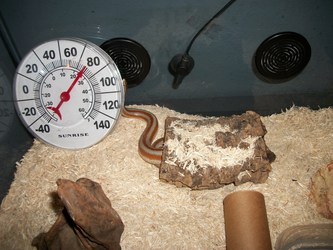 Snake Cage Temperature
