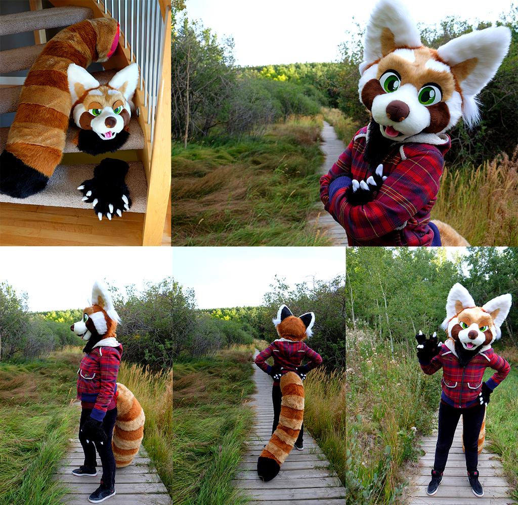 Most recent image: Red Panda Fursuit (for sale!)