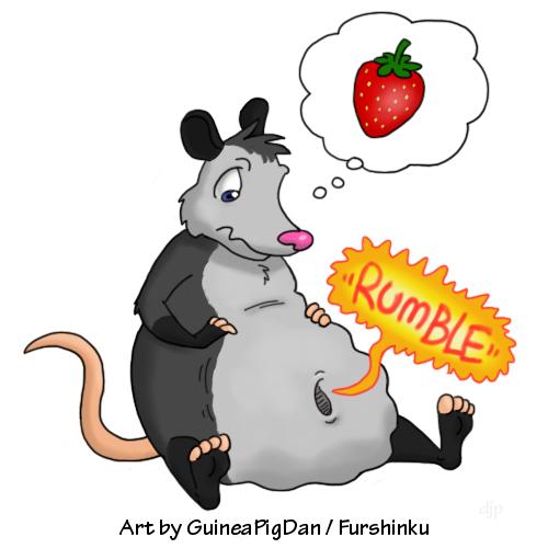 Hungry Possum