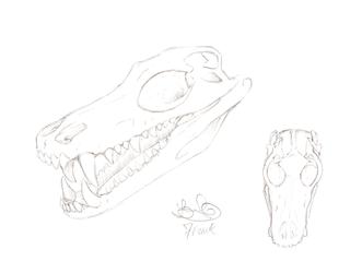 Dolostia Atrox Skull