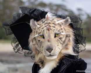 Ulladulla November 2018: The Tigress 1