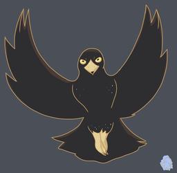 Bagge's Black Bird