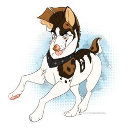 A very punk dawg