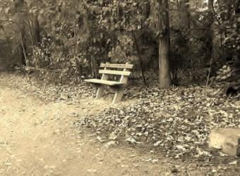 Quiet Contemplation