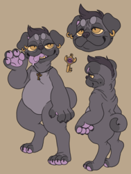 Beau the Pug