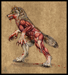 --Flayed-- Speculative Werewolf Anatomy Study