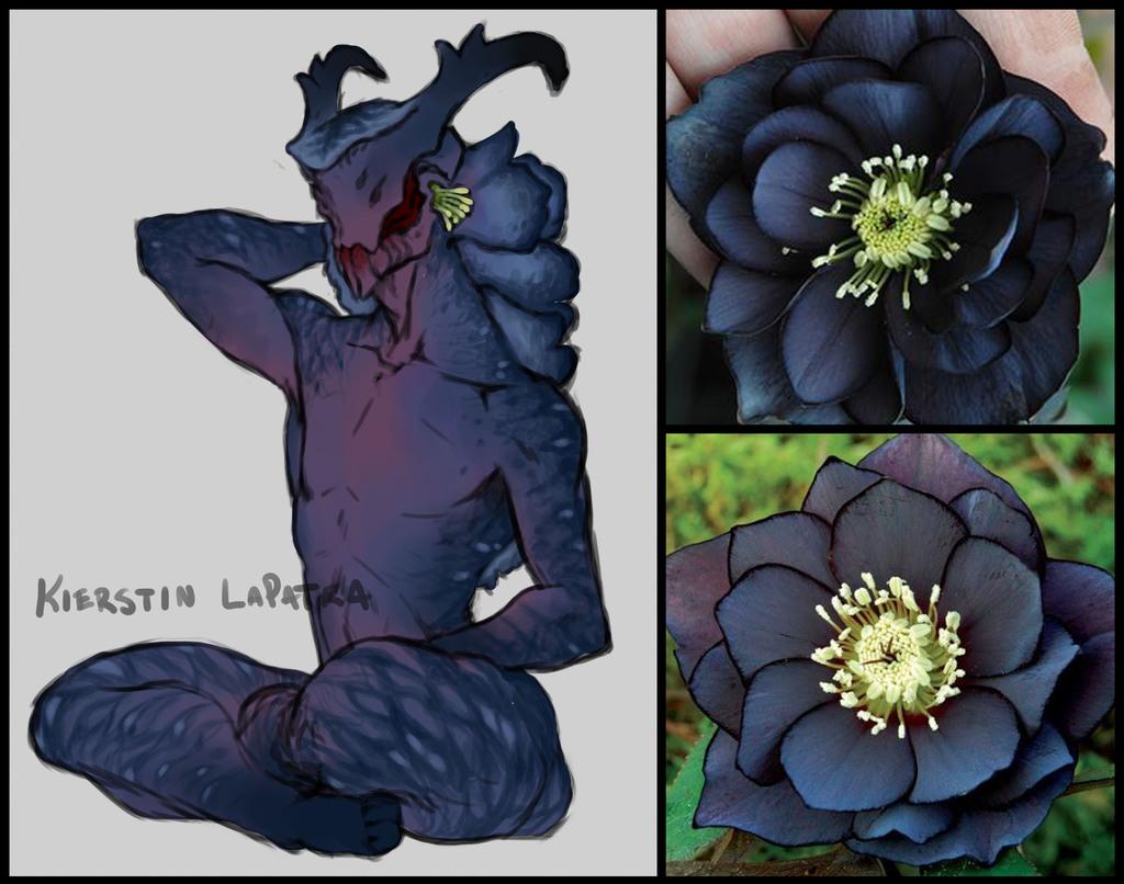 Black Onyx Helleborus