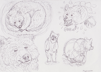 Bears are afoot