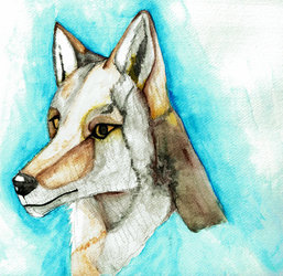 Coyote Water cOLOR