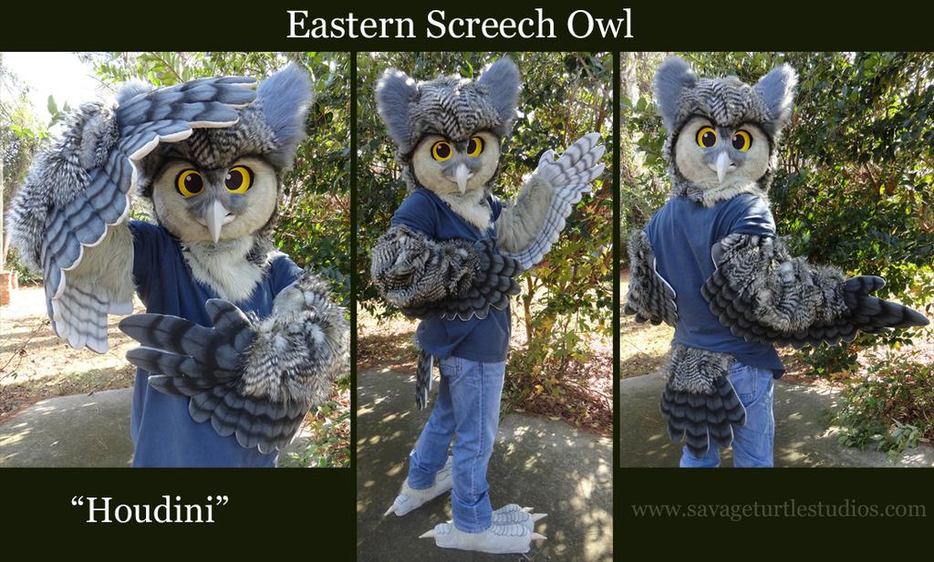 Houdini the Eastern Screech Owl -- 2012