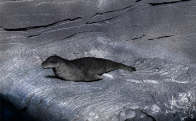 Leopard Seal Render