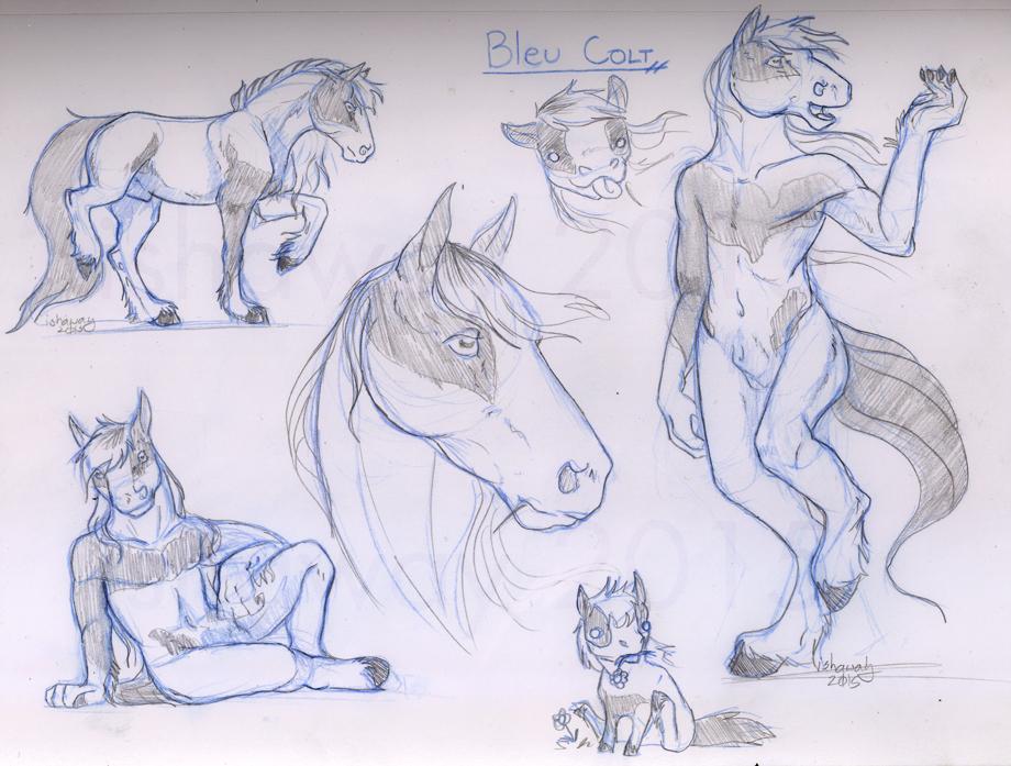 Bleu Colt - Sketch page