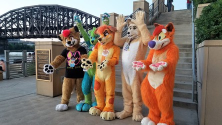 AC 2017: Dingos