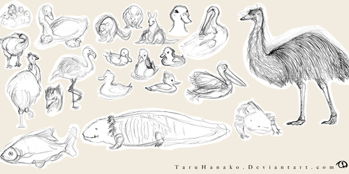 Zoo sketches - birds and fish
