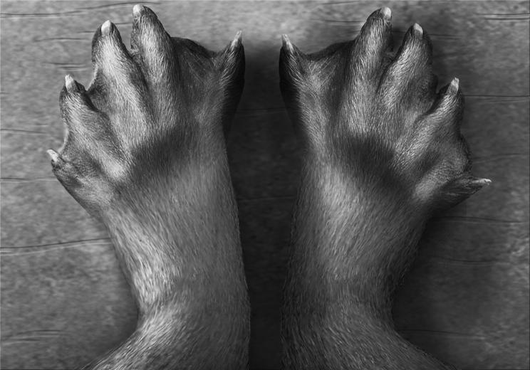 Webby feet commission for rajara