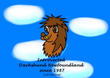 Introverted Dachshund Newfoundland