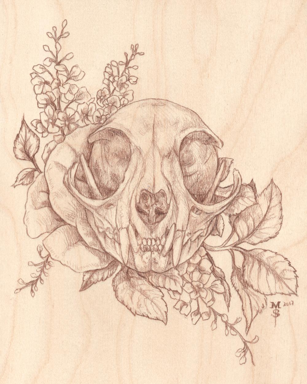 African Wildcat (sketch)