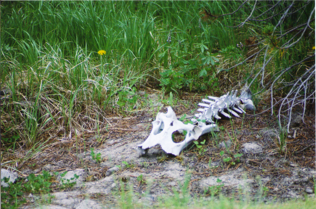 Most recent image: Old Bones