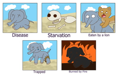 The many dies of an Elephant