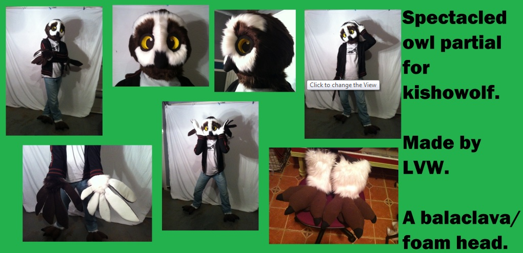 Spectacled owl partial