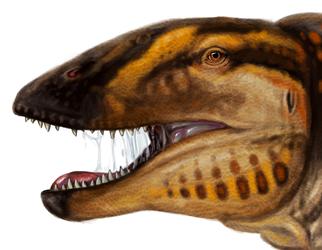 Dinovember Carcharodontosaurus