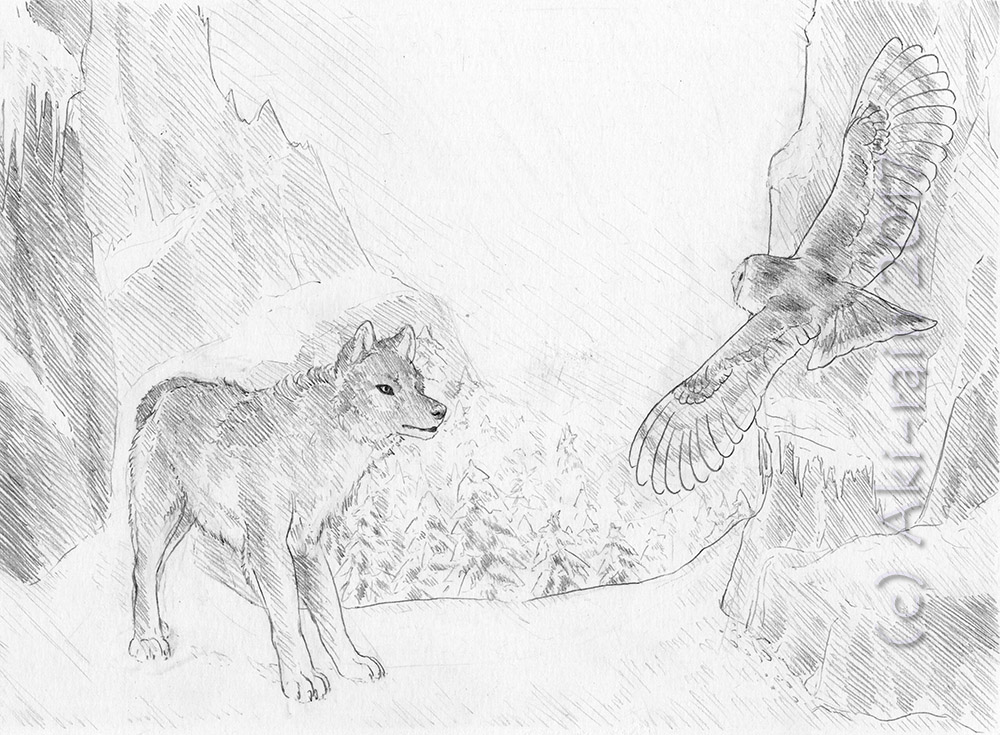 Owl and Wolf Sketch