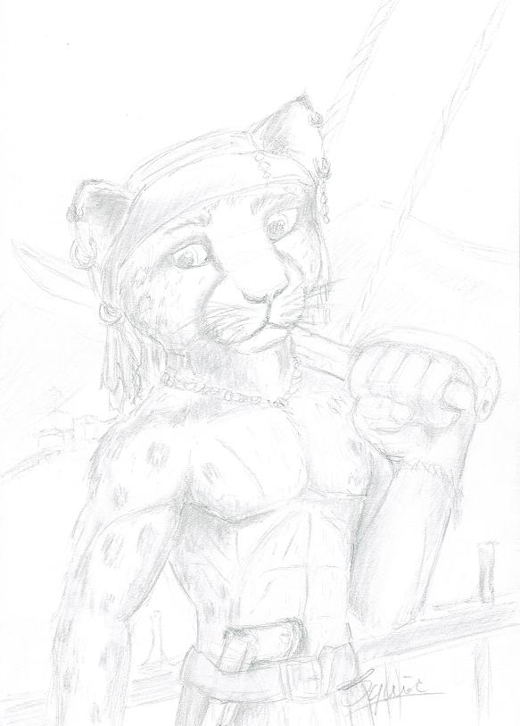 pirate cat2
