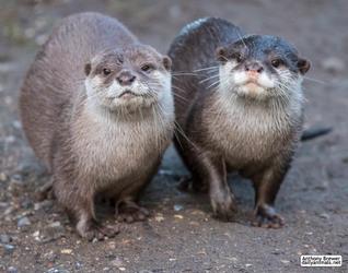 Happy World Otter Day!