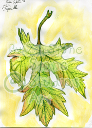 Fall Leaf watercolor