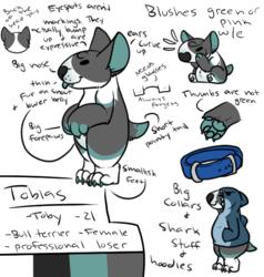Toby Form: Bull Terrier