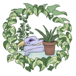 Houseplant love