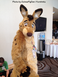 Dappie the roo at FC2015