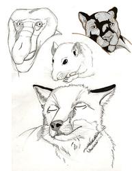 Homework - 4 Mammals