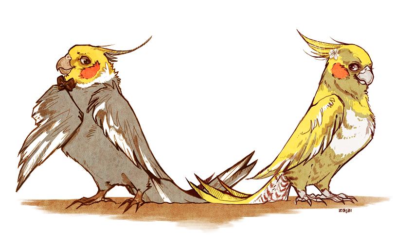 Courtship Cockatiels