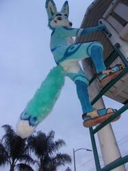 Zuzo on a ladder
