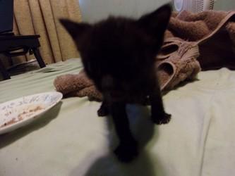New Kitten #2