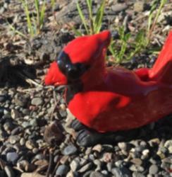 Cardinal (Sale)